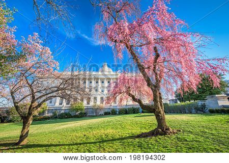Washington DC at the Capitol Building during spring season.