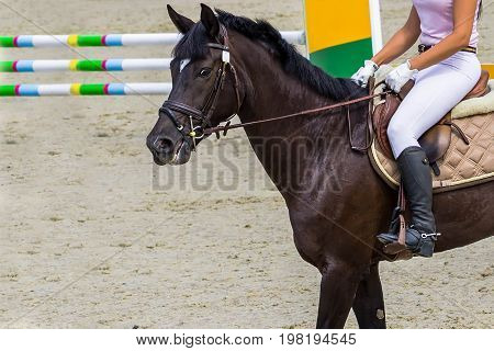 Dressage bay horse and rider in white and pink uniform. Bay horse portrait during dressage competition. Equestrian sport background. Copy space for your text.
