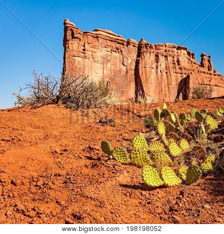 Prickly Pear Cactus in Arches National Park
