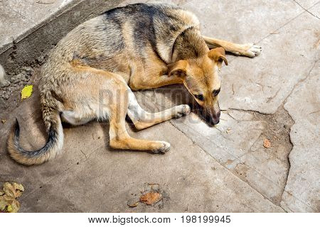 The Weakened stray dog from the shelter. Homeless dogs. Selective focus