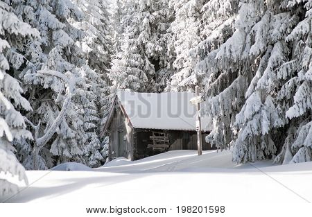 Ruined chalet and snowy fir trees in beautiful winter forest. Great Fatra mountains Slovakia