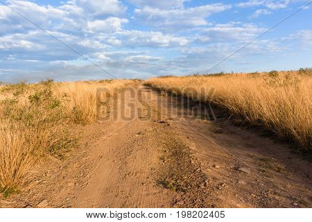 Dirt Road Grasslands Wilderness Landscape