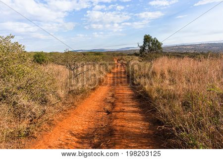 Dirt Road Wildlife Safari Landscape