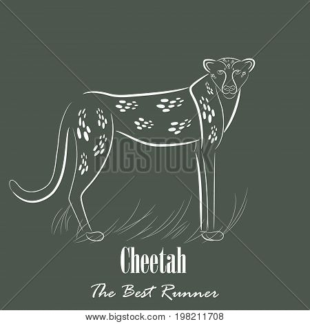 White Cheetah Silhouette Hand Drawing Digitally on the Green Gray Background with the Heading Below. Line Art Vector