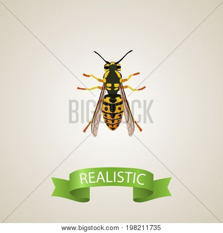 Realistic Sting Element. Vector Illustration Of Realistic Bee Isolated On Clean Background