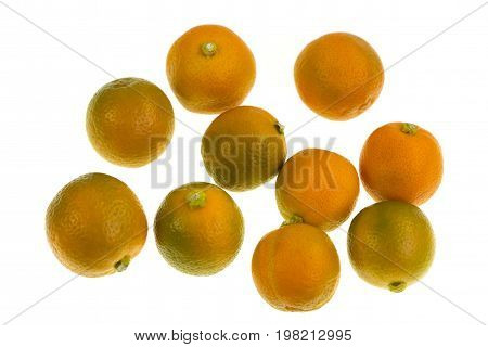 Calamondin also known as calamansi or Citrofortunella microcarpa ir a plant and fruit of the citrus family which resembles a small round lime
