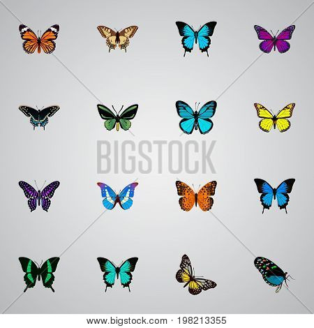 Realistic Sky Animal, Tropical Moth, Danaus Plexippus And Other Vector Elements