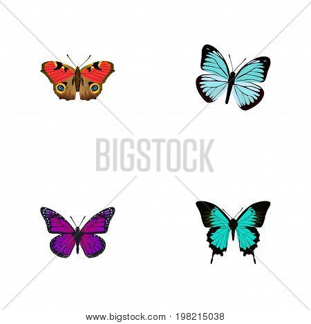 Realistic Copper, Purple Monarch, American Painted Lady And Other Vector Elements