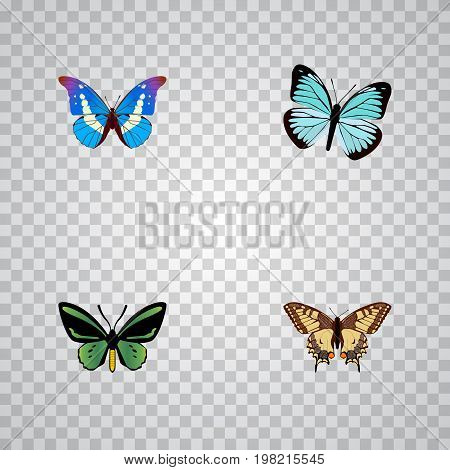 Realistic Lexias, Tiger Swallowtail, Tropical Moth And Other Vector Elements