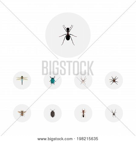 Realistic Dor, Bug, Wasp And Other Vector Elements