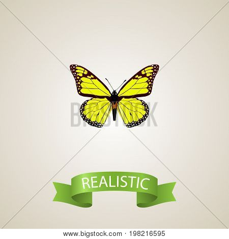 Realistic Yello-Wing Element. Vector Illustration Of Realistic Archippus Isolated On Clean Background