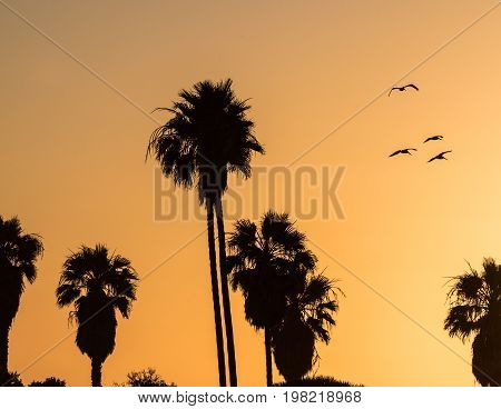 Orange sunset sky with silhouette of birds flying and palm trees