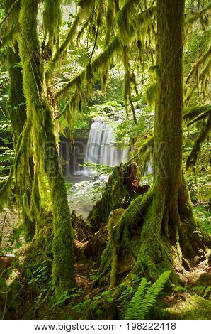 Waterfall seen through lush green mossy trees in forest