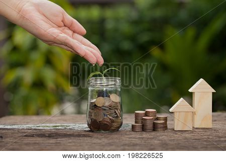 Money and plant with hand watering a tree Saving money concept concept of financial savings to buy a housetrees growing in a sequence of germination on piles of coins Growth business money.