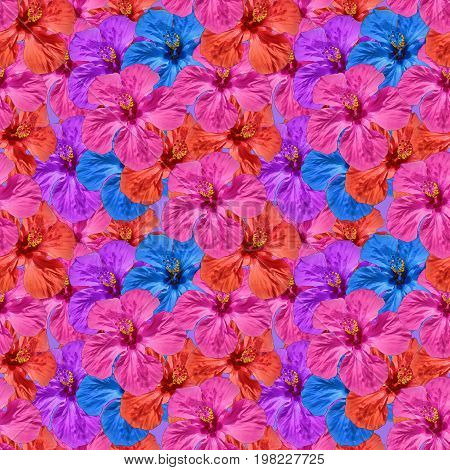 Hibiscus. Texture of flowers. Seamless pattern for continuous replicate. Floral background photo collage for production of textile cotton fabric. For use in wallpaper covers