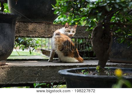 Cat hidding among bonsai trees and looking at camera, China