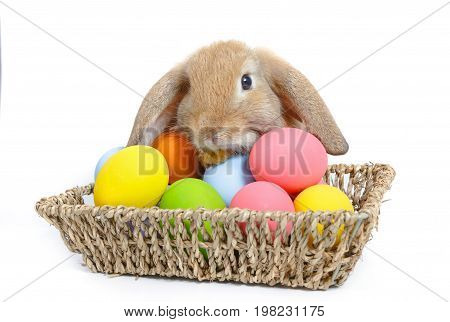Cute little easter bunny with basket on white background