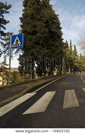 Low angle shot of zebra cross, with trees lining the roadside.