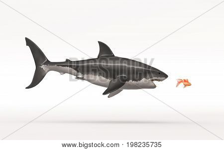 White shark attack a goldfish on a white background. This is a 3d render illustration