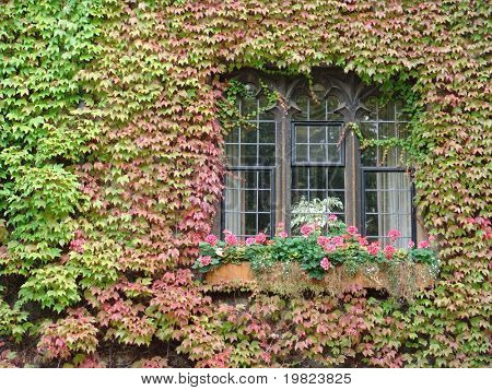 Window with ivy