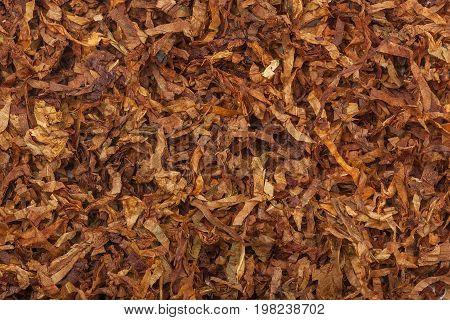 Tobacco texture. High quality dry cut tobacco big leaf, close up, background.