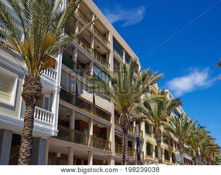 Sunny Mediterranean popular summer tourist destination beach promenade with palm trees Torrevieja Valencia Spain
