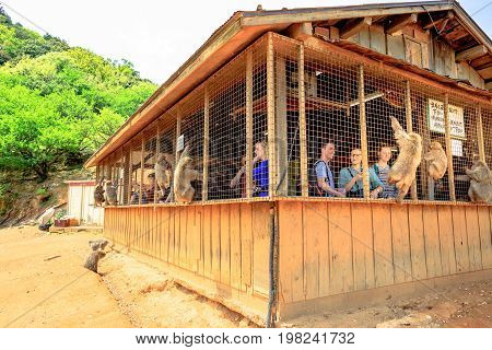Kyoto, Japan - April 27, 2017: people photograph and feeding Japanese macaque from the hut atop Iwatayama Monkey Park in Arashiyama. People enjoy interaction with monkey. Leisure and tourism concept.