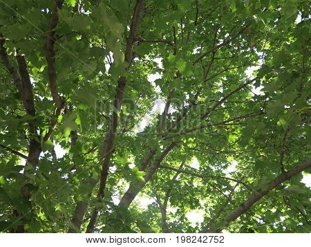 Tree in summer with sunlight casting beautiful shadows on green leaves and bark