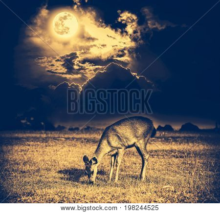 Beautiful deer graze among sky with bright full moon and dark cloudy in forest. Animals in natural environment serenity background. Vignette and vintage effect tone. The moon taken with my camera.