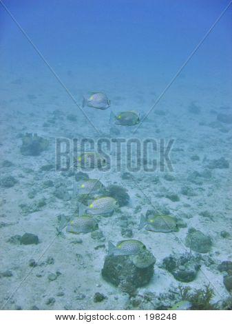 Sea Environment
