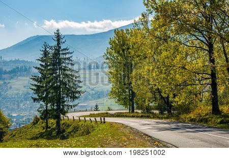 Forest Along The Hillside Road On Sunny Day