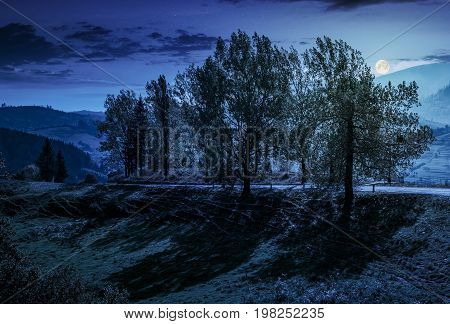 range of poplar trees by the road on hillside. beautiful day in mountainous countryside at night in full moon light