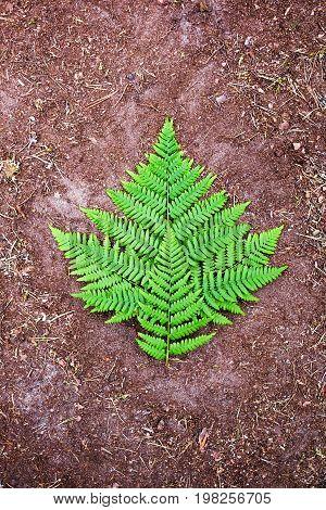 Green fern leaf on ground background close up