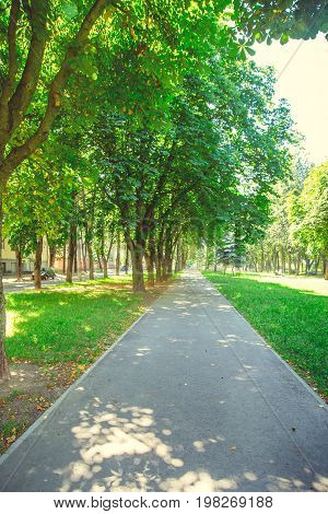 A deserted boulevard in the center of the city in bright sunny summer weather