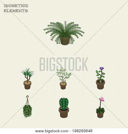 Isometric Houseplant Set Of Plant, Peyote, Flower And Other Vector Objects