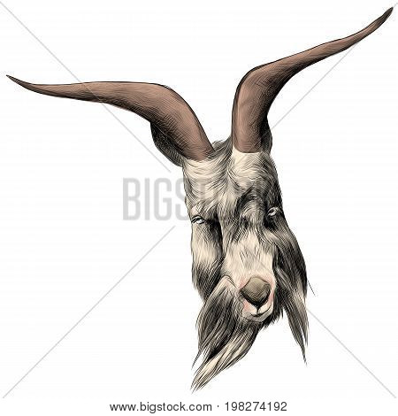 the head sheep with large horns sketch vector graphics color picture