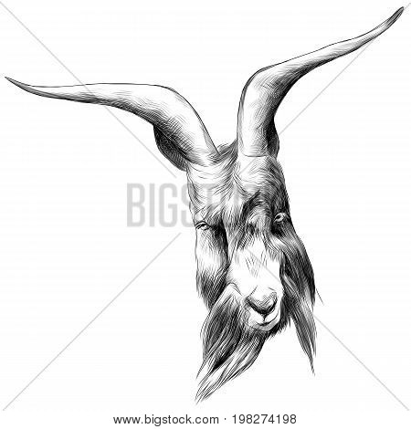 the head sheep with large horns sketch vector graphics black and white drawing