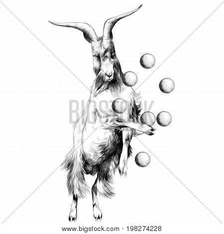 sheep is on its hind legs in a circus and juggles with balls sketch vector graphics black and white drawing