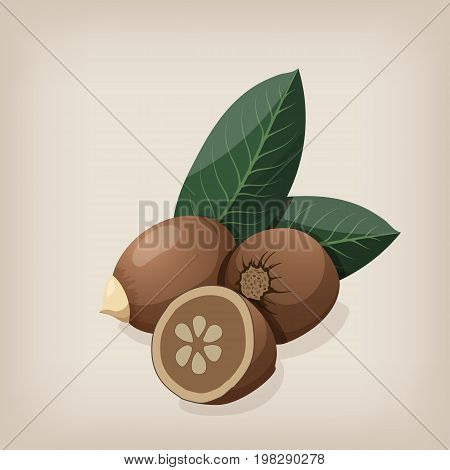 Babassu seeds with leaves. Vector illustration. EPS10.