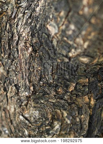 COLOR PHOTO OF CLOSE-UP OF LIVING TREE BARK