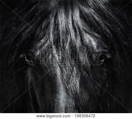 Portrait close up Spanish purebred horse with long mane. Black-and-White photo. Can be used for decoration, interior print.