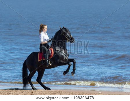 Young woman riding horse on beach of blue sea. Andalusian stallion stands on hind legs.