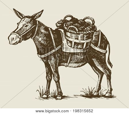 vector vintage hand drawn illustration of a donkey