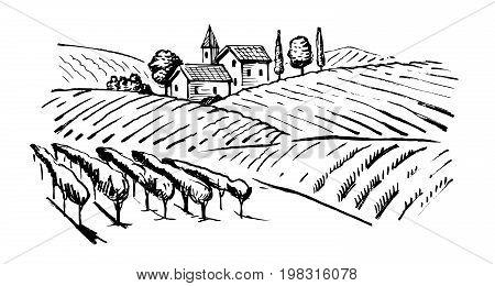vector vintage hand drawn illustration of wineyard
