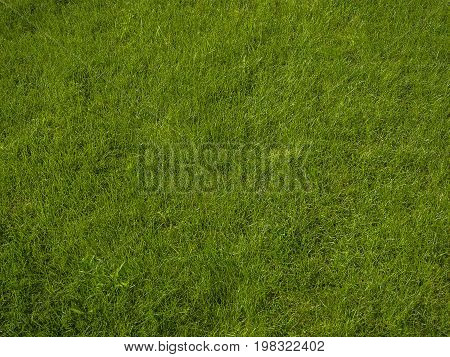 Perfect Fresh Lush Short Green Grass - Background