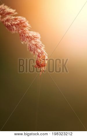 Bright photo of a macro spider a cross on a blade of grass on a sunny morning