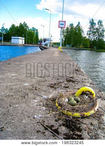 Bird eggs in a ship mooring ring on the dock of a customs station