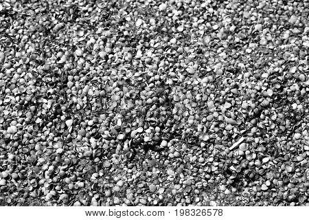Photo shell texture on the beach of a sunny beach