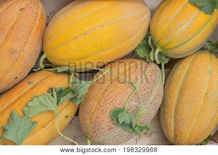 Farmers Market Melons In A Wooden Crates, Background