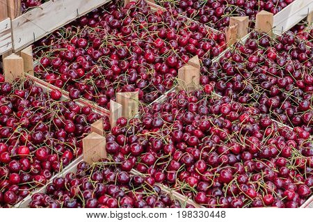 Farmers Market Organic Cherrys In A Wooden Crates 3